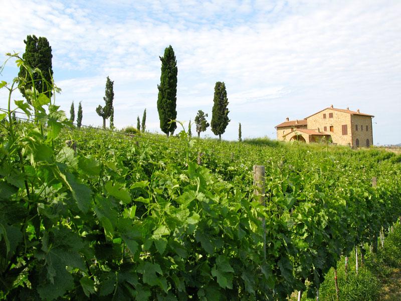 Il casolare e le vigne di Podere Marcampo Agriturismo e Azienda Agricola Volterra