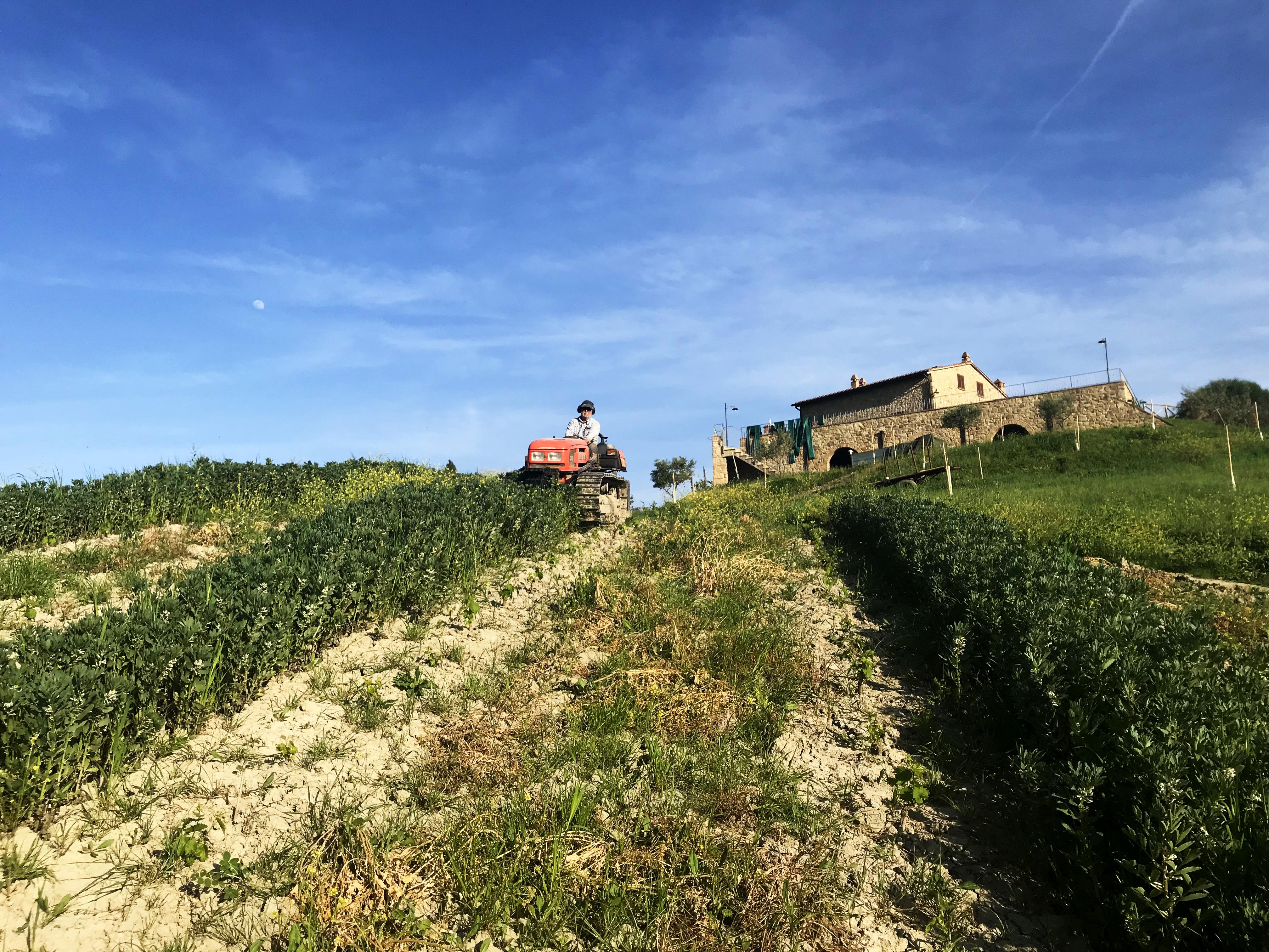 Podere Marcampo Agriturismo Azienda Agricola Volterra